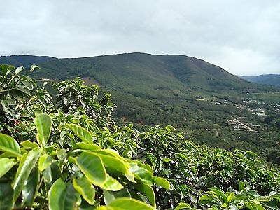 Mocha Java Coffee Beans 100% Fresh Roasted Whole Bean Micro Roasted 5 LBS